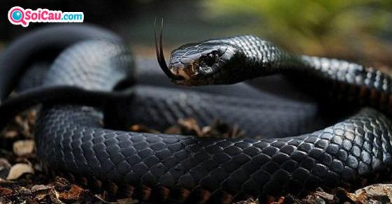 Giải mã giấc mơ thấy rắn đen