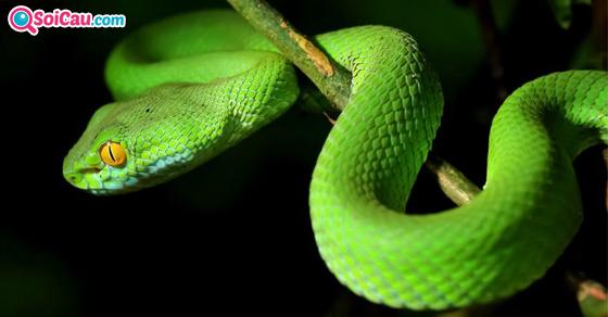 Giải mã giấc mơ thấy rắn