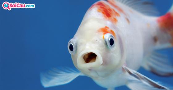 Nằm mơ thấy cá đánh con gì?