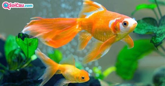 Nằm mơ thấy cá là điềm gì?