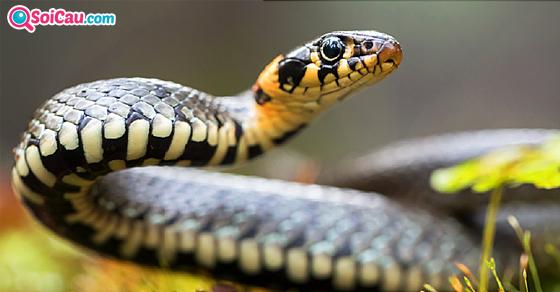 Ngủ mơ thấy rắn đánh đề con gì?