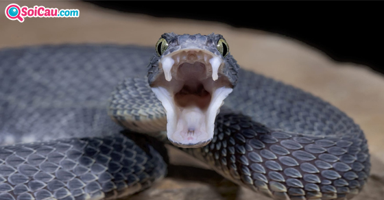 Nằm mơ thấy rắn là điềm gì?