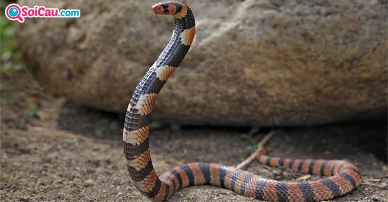 Ý nghĩa giấc mơ thấy rắn