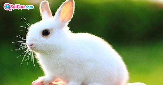 Ngủ mơ thấy thỏ số mấy?
