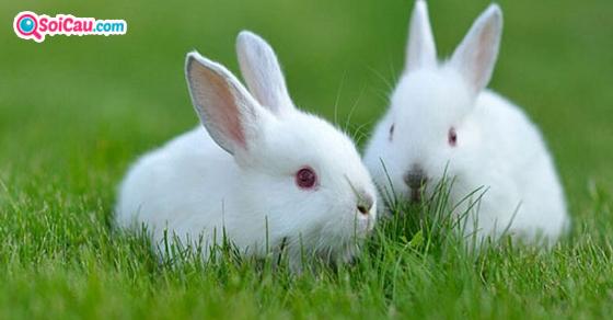 Nằm mơ thấy thỏ là điềm gì?