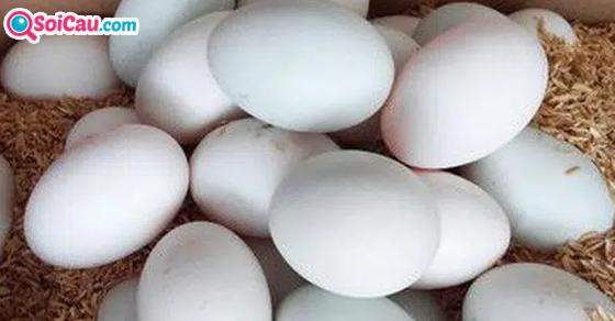Mơ thấy trứng vịt là điềm gì?